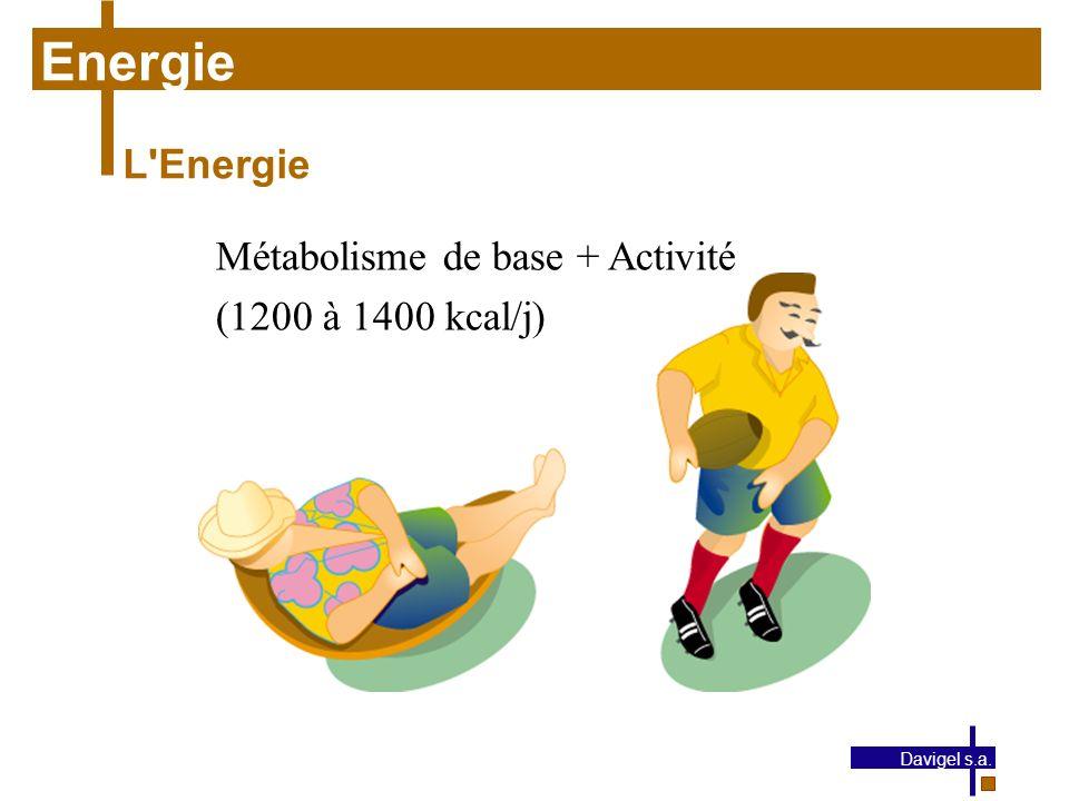 Energie L Energie Métabolisme de base + Activité (1200 à 1400 kcal/j)