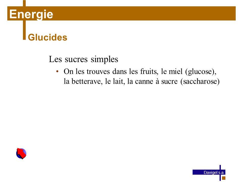 Energie Glucides Les sucres simples