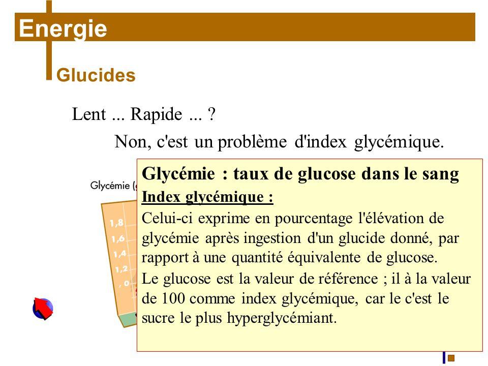 Courbes de glycémie et réponses insulinémiques