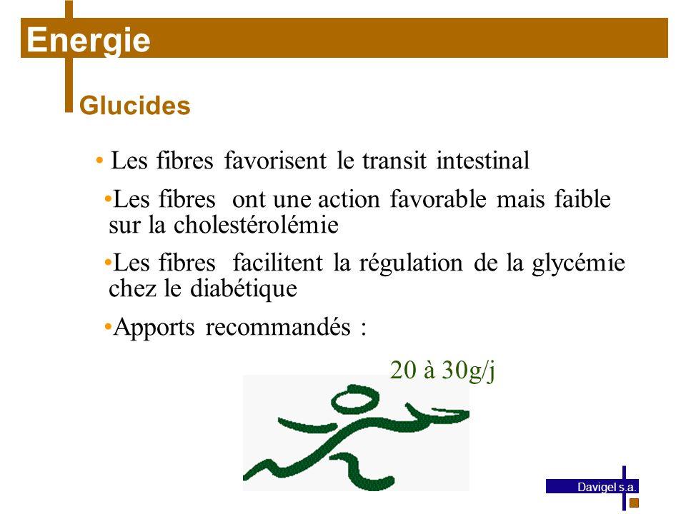 Energie Glucides Les fibres favorisent le transit intestinal