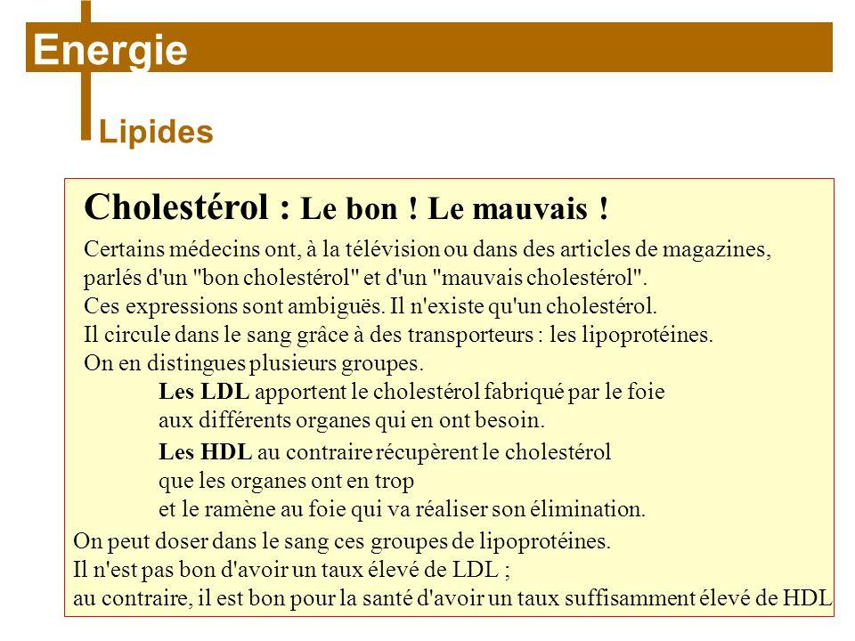 Energie Cholestérol : Le bon ! Le mauvais ! Lipides