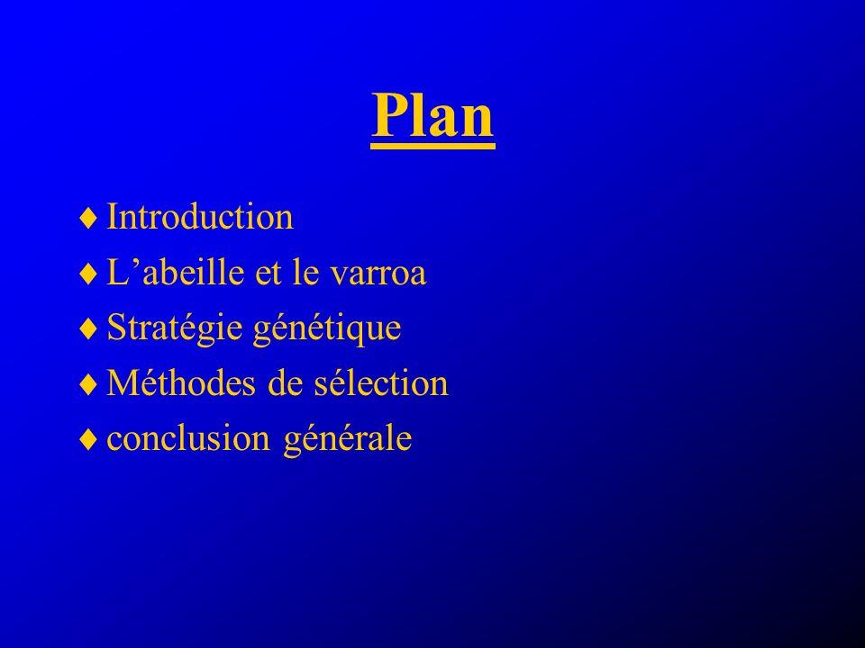 Plan Introduction L'abeille et le varroa Stratégie génétique