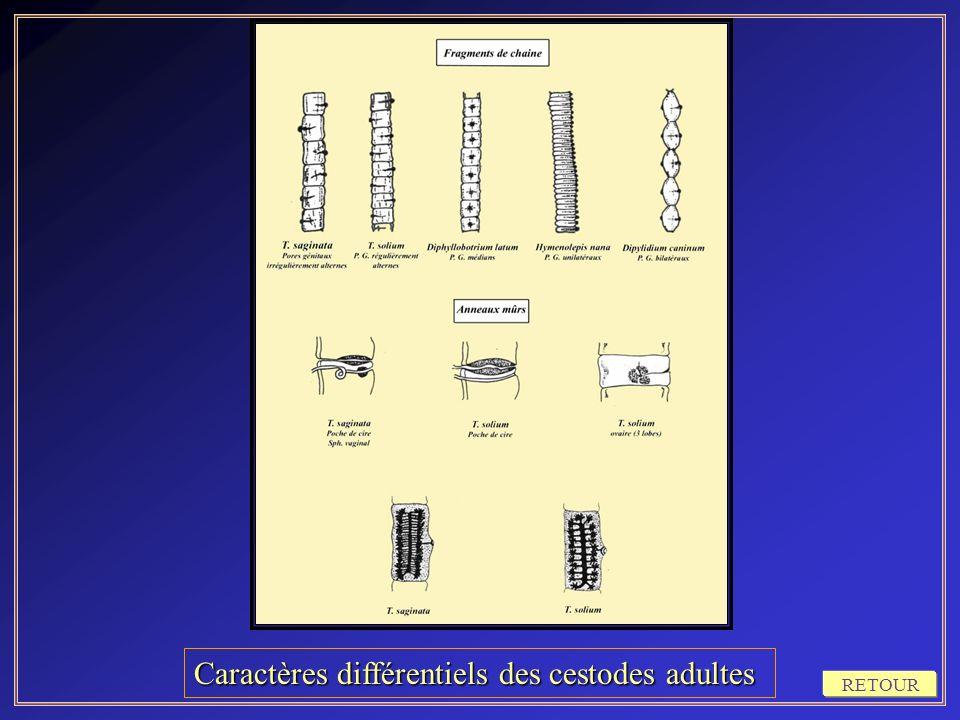Caractères différentiels des cestodes adultes