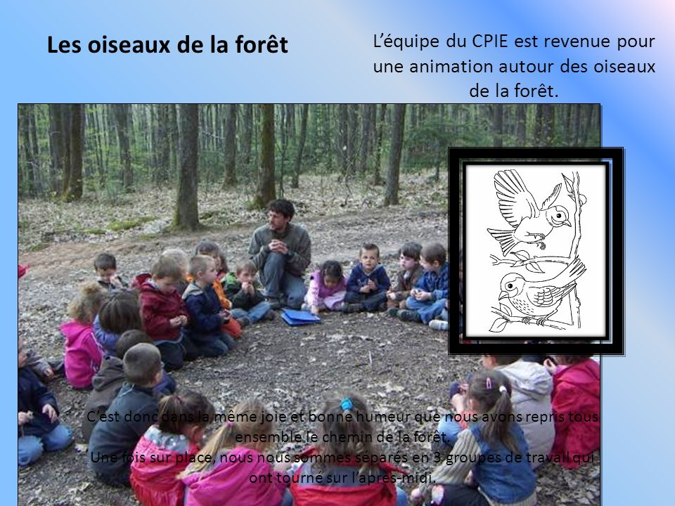 Les oiseaux de la forêt L'équipe du CPIE est revenue pour une animation autour des oiseaux de la forêt.