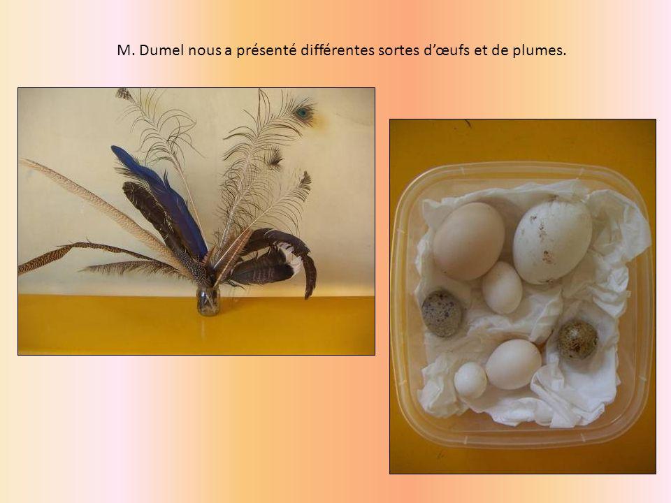 M. Dumel nous a présenté différentes sortes d'œufs et de plumes.