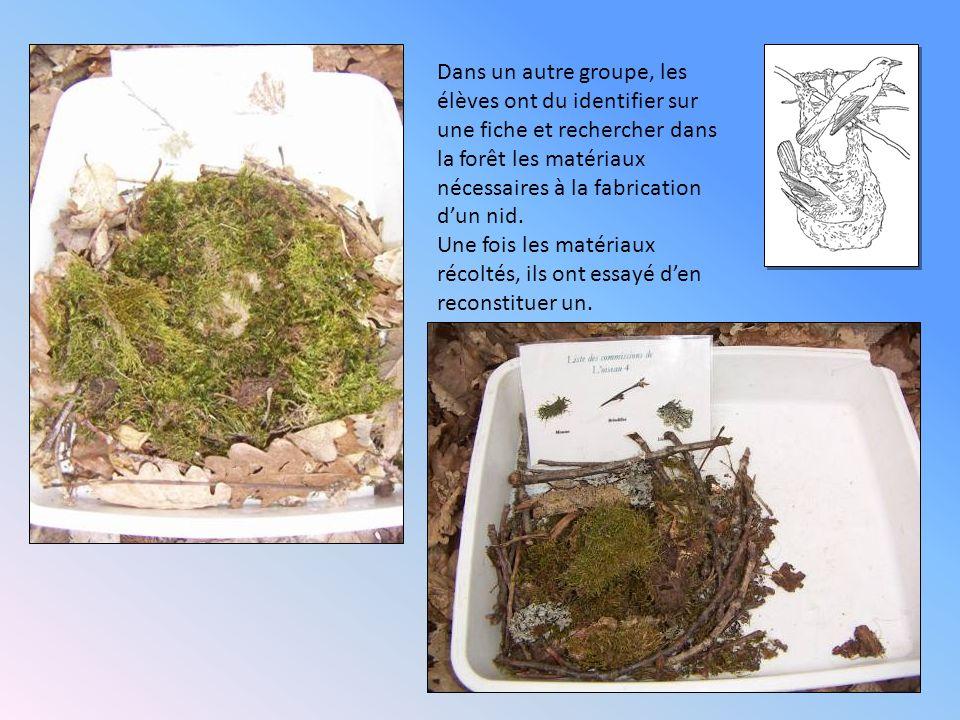 Dans un autre groupe, les élèves ont du identifier sur une fiche et rechercher dans la forêt les matériaux nécessaires à la fabrication d'un nid.