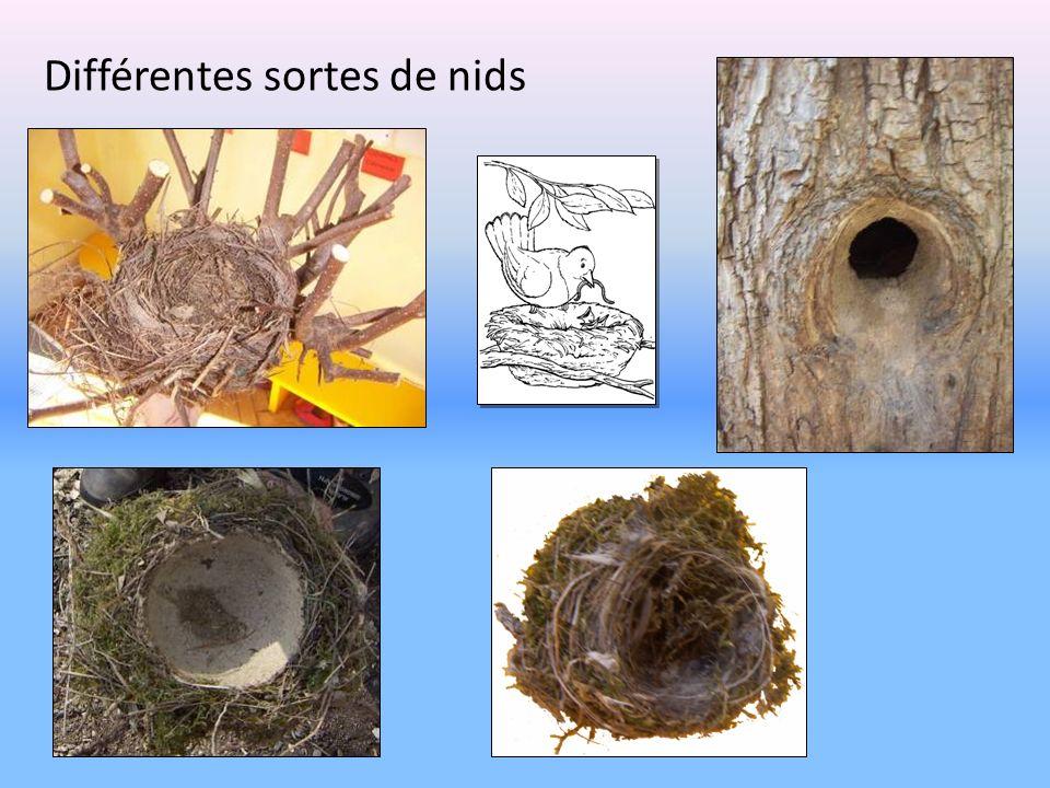 Différentes sortes de nids