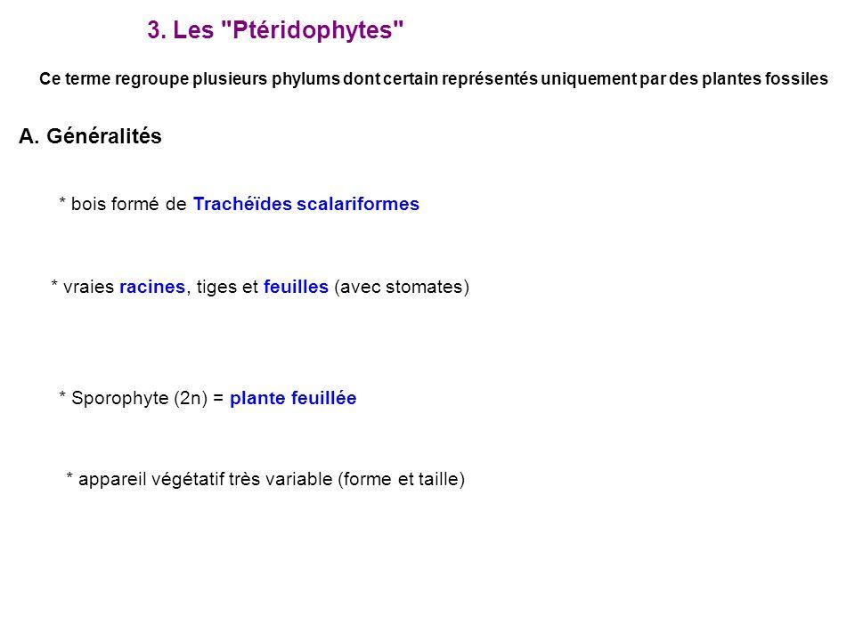 3. Les Ptéridophytes A. Généralités