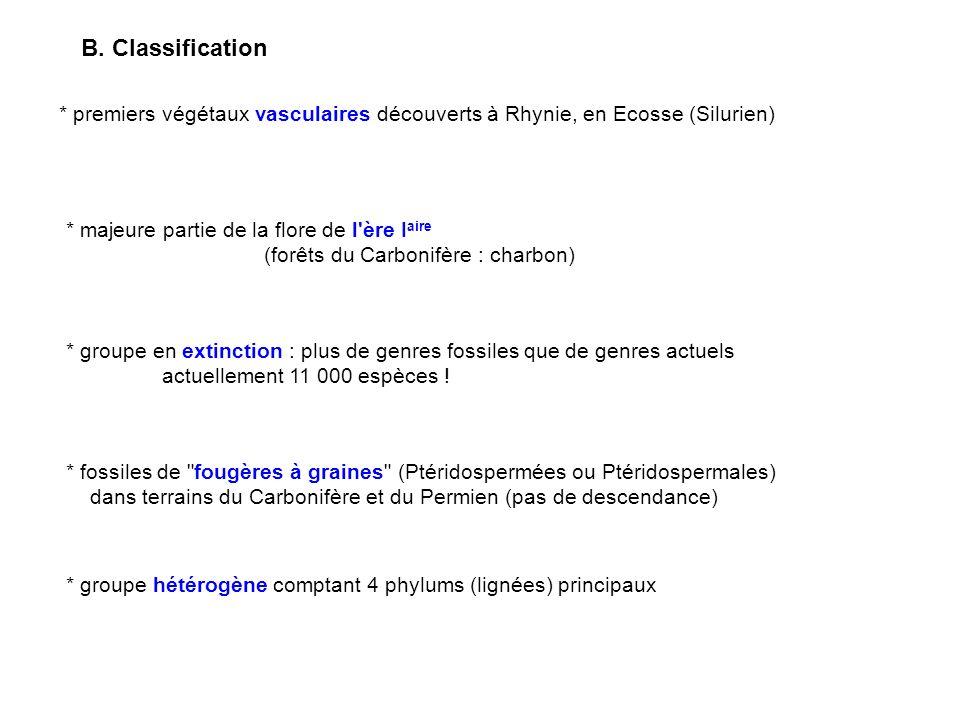 B. Classification * premiers végétaux vasculaires découverts à Rhynie, en Ecosse (Silurien) * majeure partie de la flore de l ère Iaire.