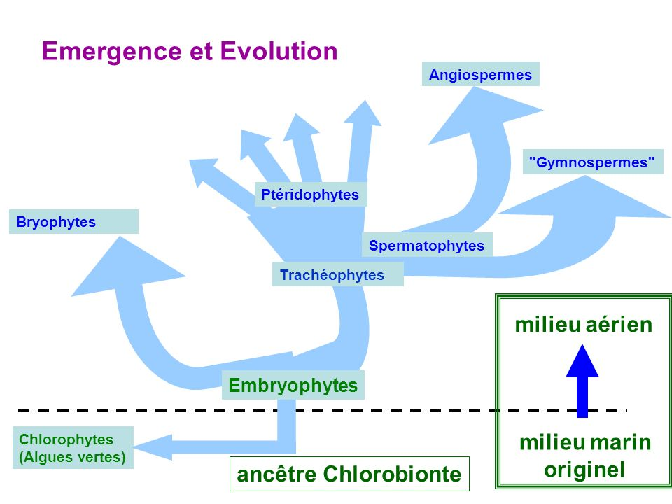 Emergence et Evolution