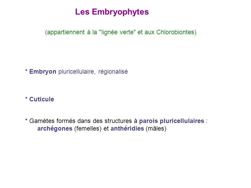 Les Embryophytes (appartiennent à la lignée verte et aux Chlorobiontes) * Embryon pluricellulaire, régionalisé.