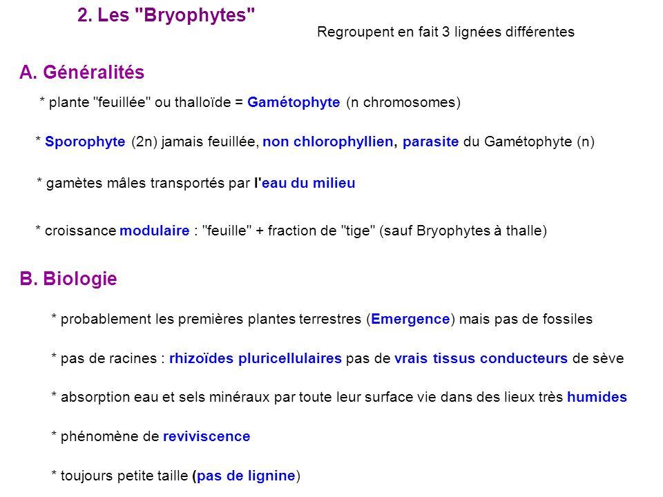 2. Les Bryophytes A. Généralités B. Biologie
