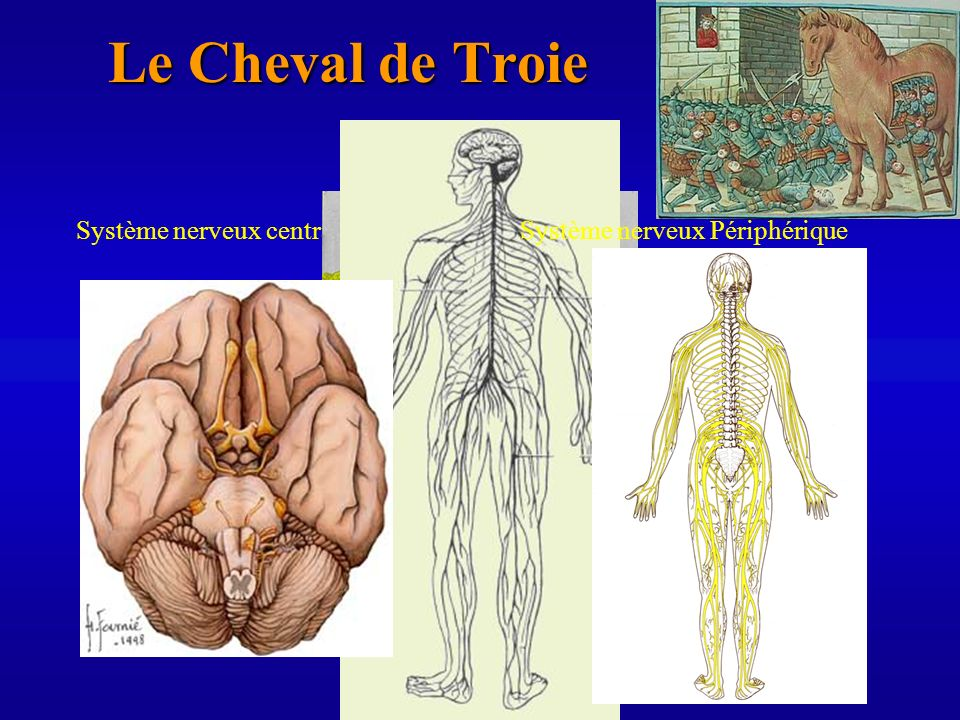 Le Cheval de Troie Système nerveux central
