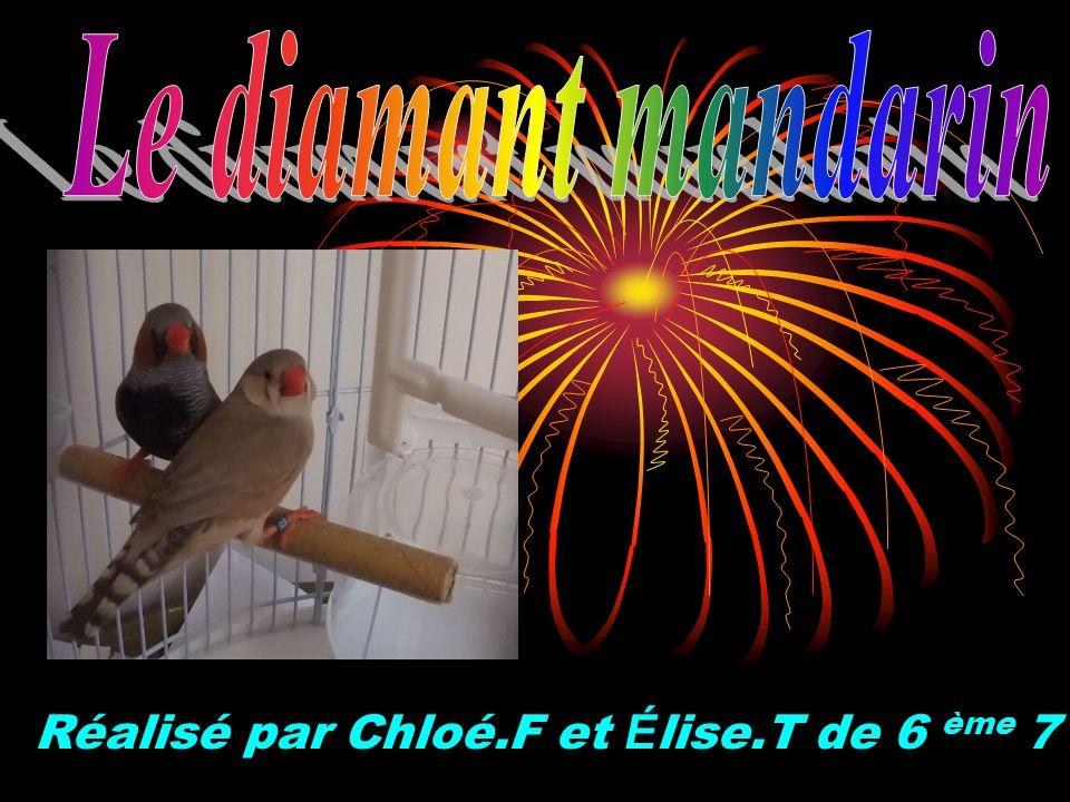 Réalisé par Chloé.F et Élise.T de 6 ème 7
