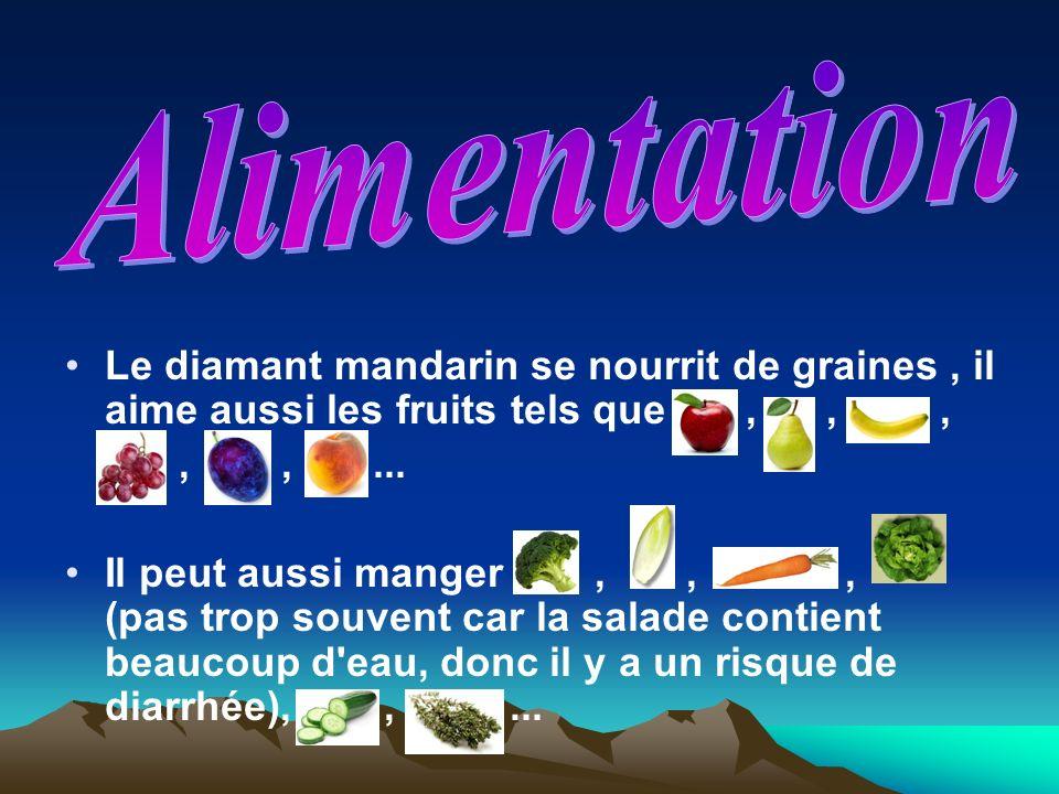 Alimentation Le diamant mandarin se nourrit de graines , il aime aussi les fruits tels que , , ,