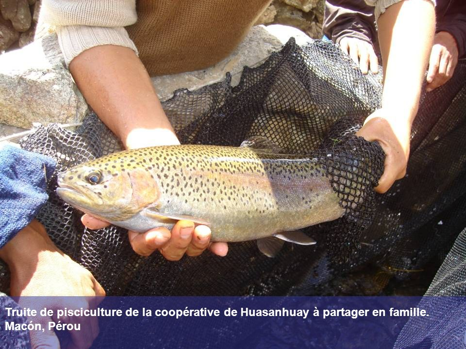 Truite de pisciculture de la coopérative de Huasanhuay à partager en famille. Macón, Pérou