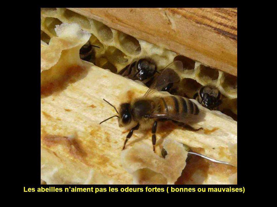 Les abeilles n'aiment pas les odeurs fortes ( bonnes ou mauvaises)