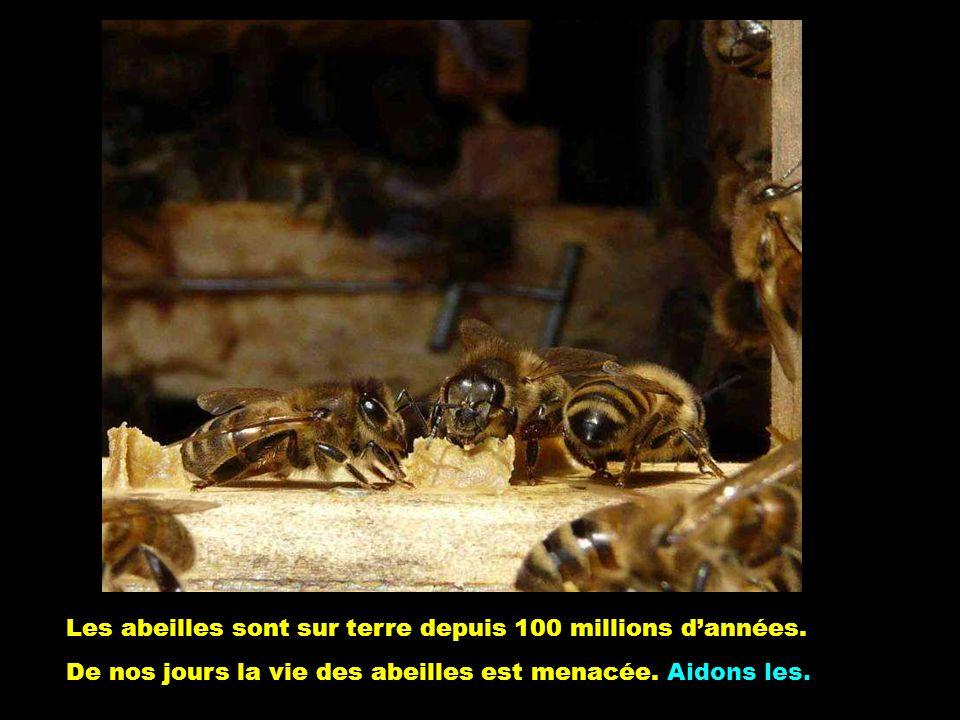 Les abeilles sont sur terre depuis 100 millions d'années.