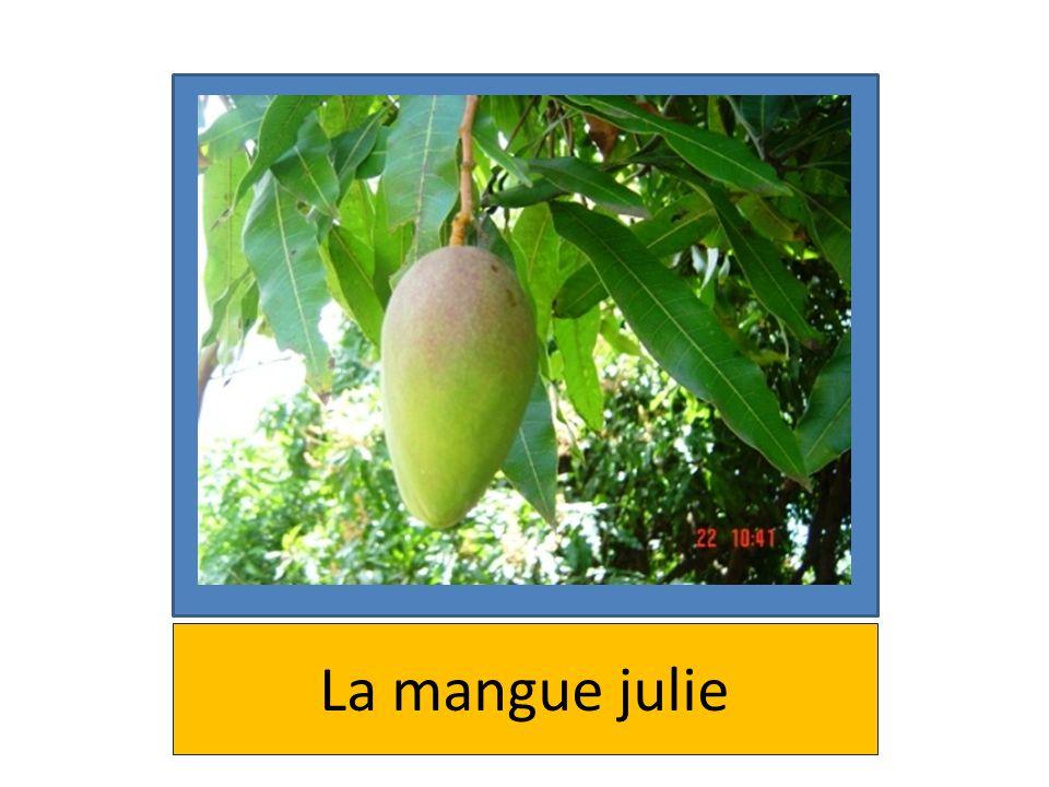 La mangue julie