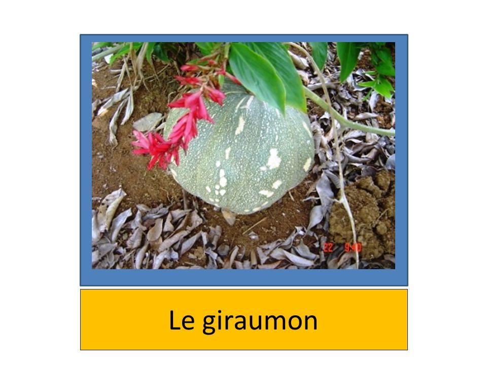 Le giraumon