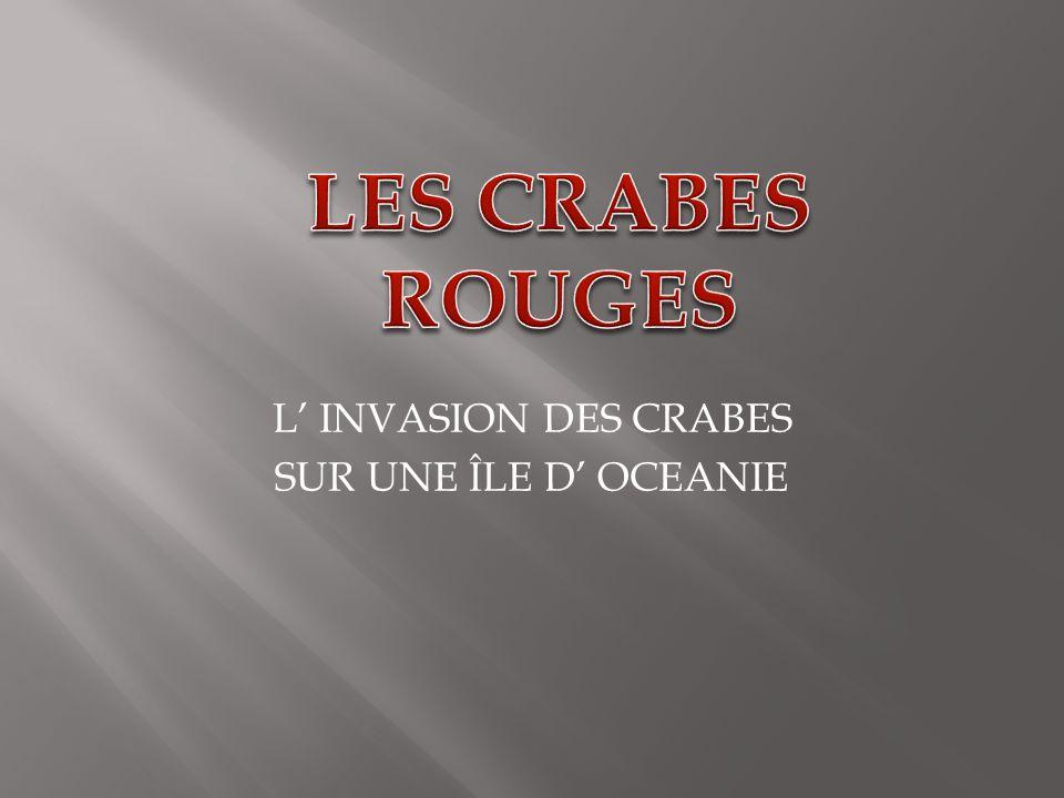 L' INVASION DES CRABES SUR UNE ÎLE D' OCEANIE