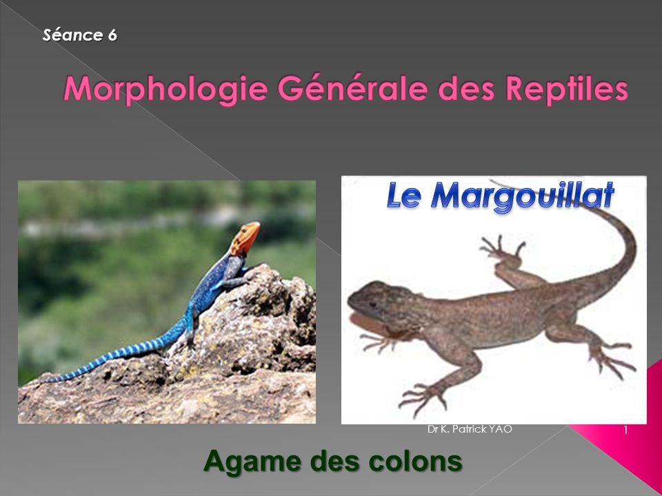 Morphologie Générale des Reptiles