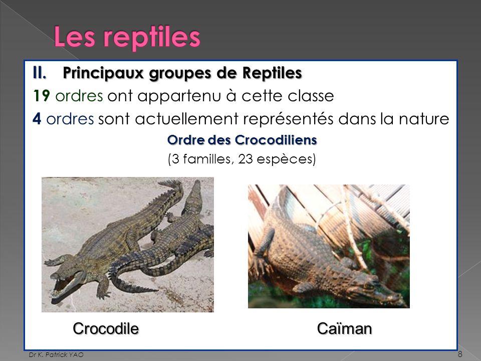 Ordre des Crocodiliens