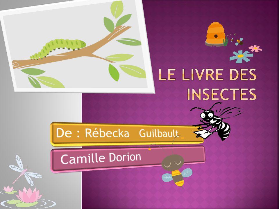 Le livre des insectes De : Rébecka Guilbault Camille Dorion