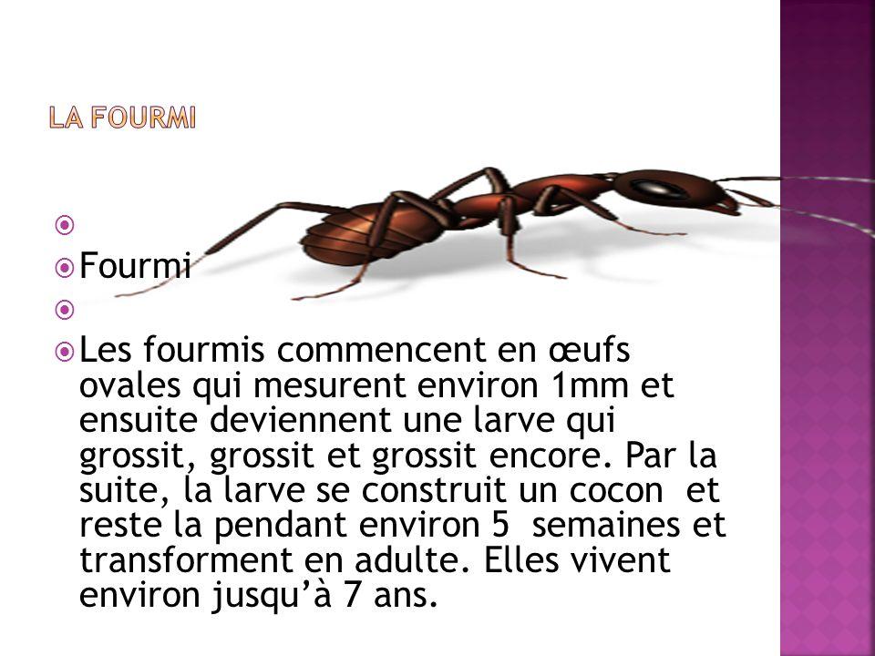 LA FOURMI Fourmi.