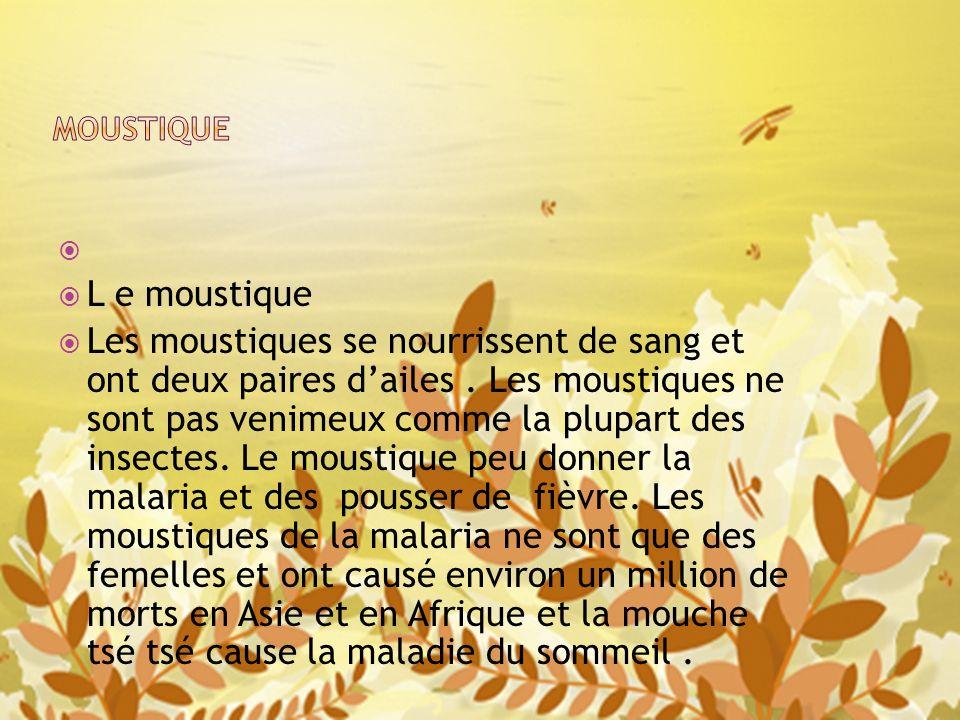 MOUSTIQUE L e moustique.