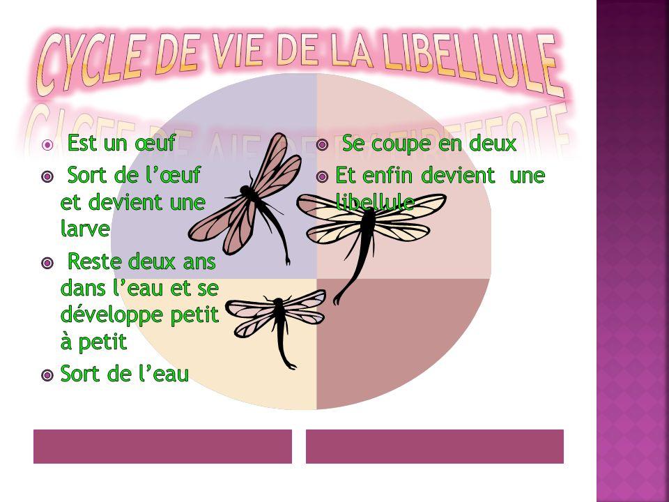 Cycle de vie de la libellule