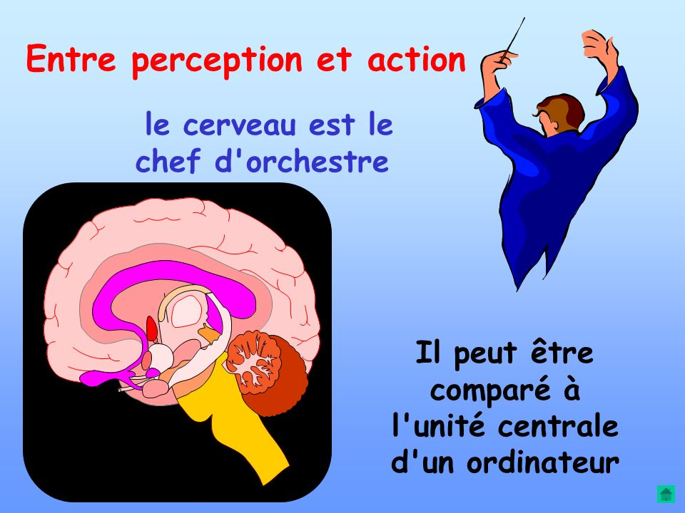 Entre perception et action