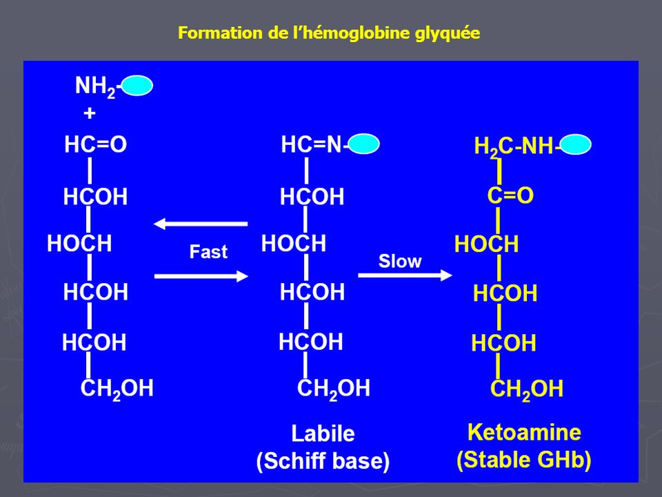 Formation de l'hémoglobine glyquée
