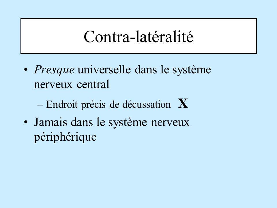 Contra-latéralité Presque universelle dans le système nerveux central
