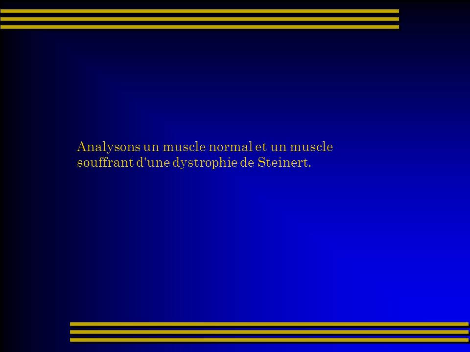 Analysons un muscle normal et un muscle