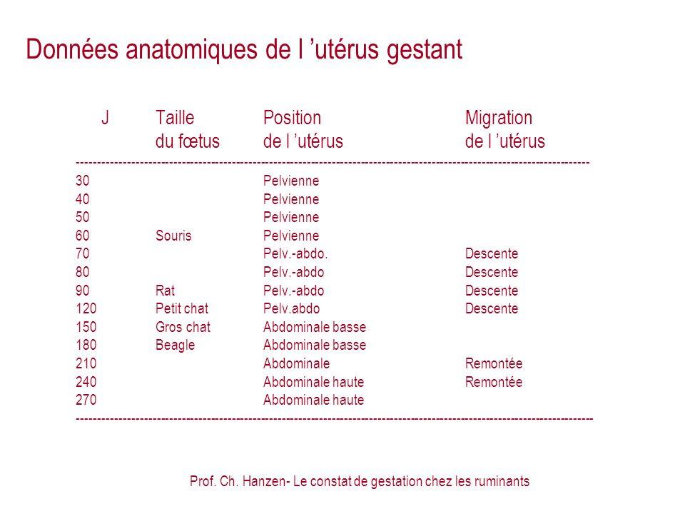 Données anatomiques de l 'utérus gestant