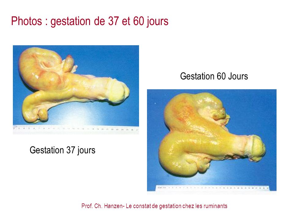 Photos : gestation de 37 et 60 jours