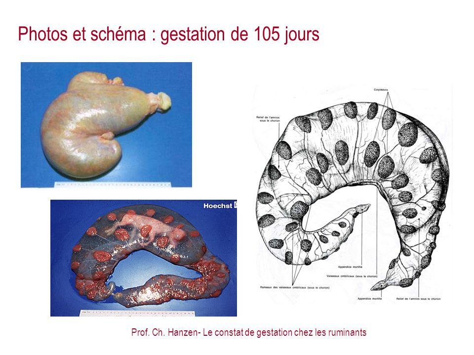 Photos et schéma : gestation de 105 jours