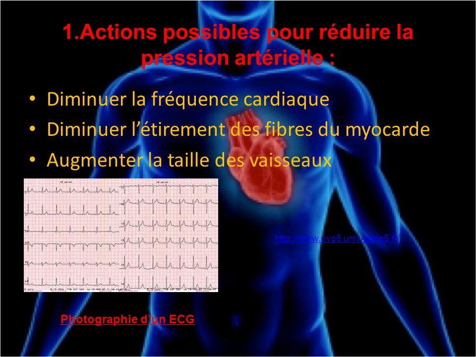 1.Actions possibles pour réduire la pression artérielle :