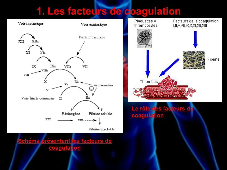 1. Les facteurs de coagulation
