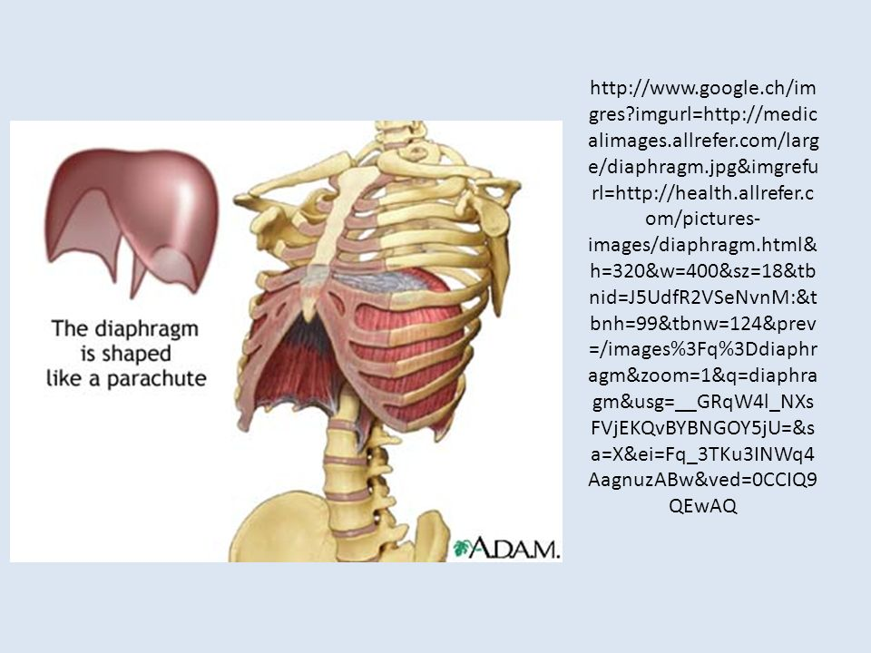 http://www. google. ch/imgres. imgurl=http://medicalimages. allrefer