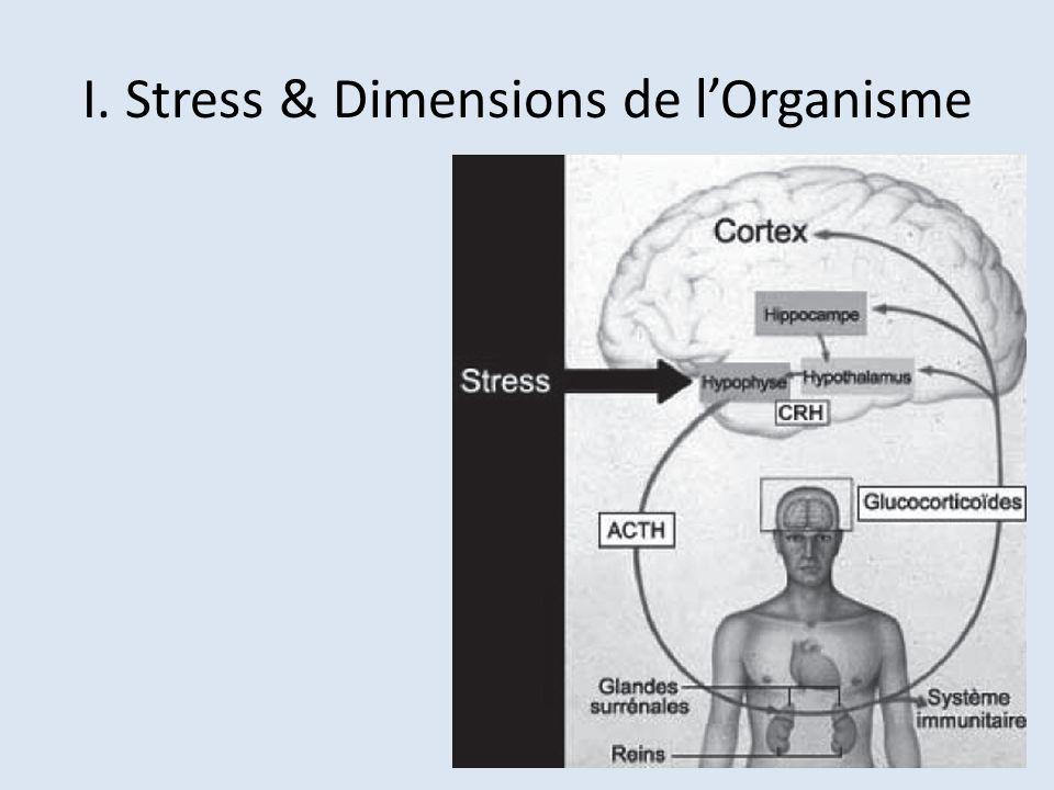 I. Stress & Dimensions de l'Organisme