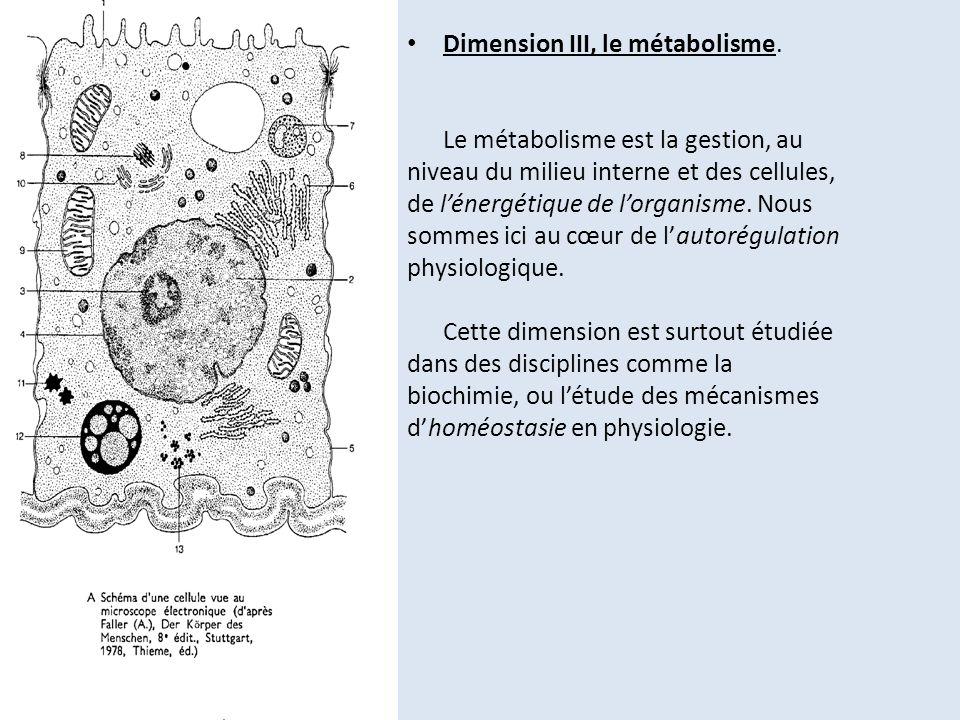 Dimension III, le métabolisme.