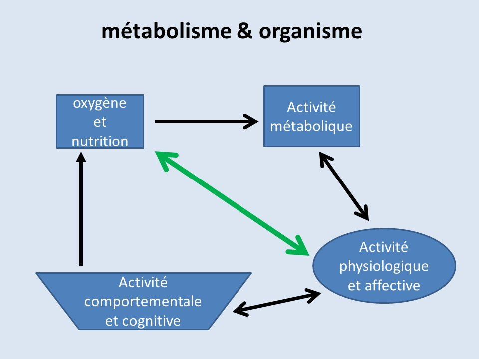métabolisme & organisme