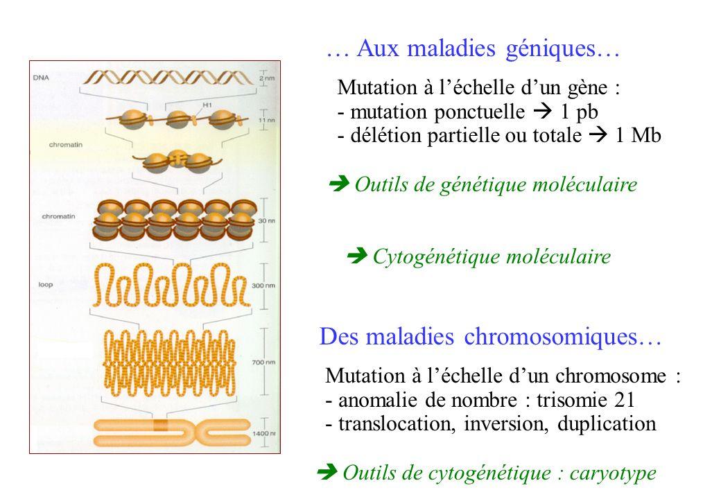 … Aux maladies géniques…