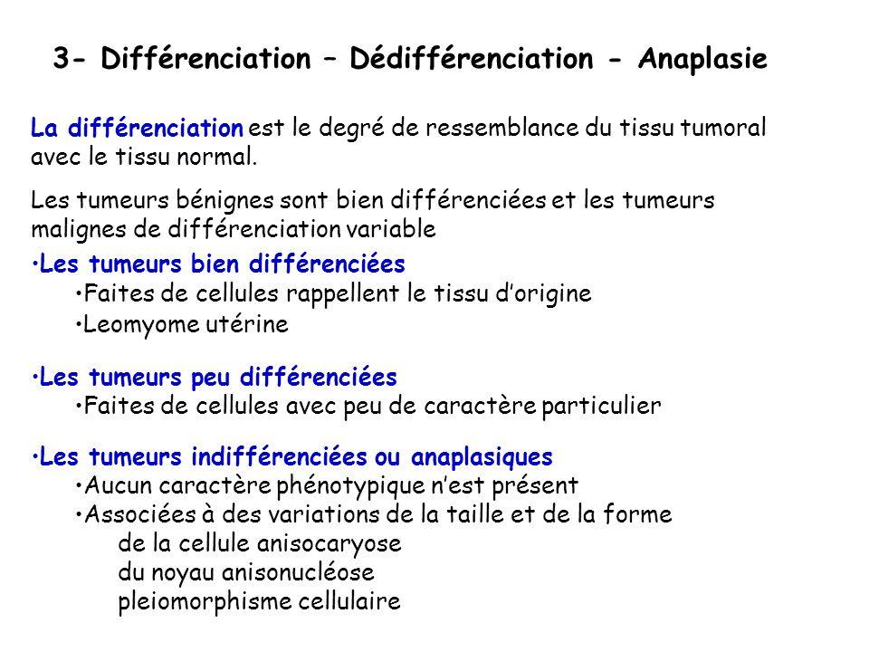 3- Différenciation – Dédifférenciation - Anaplasie