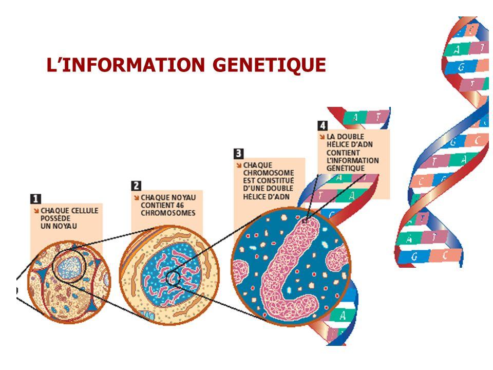 L'INFORMATION GENETIQUE