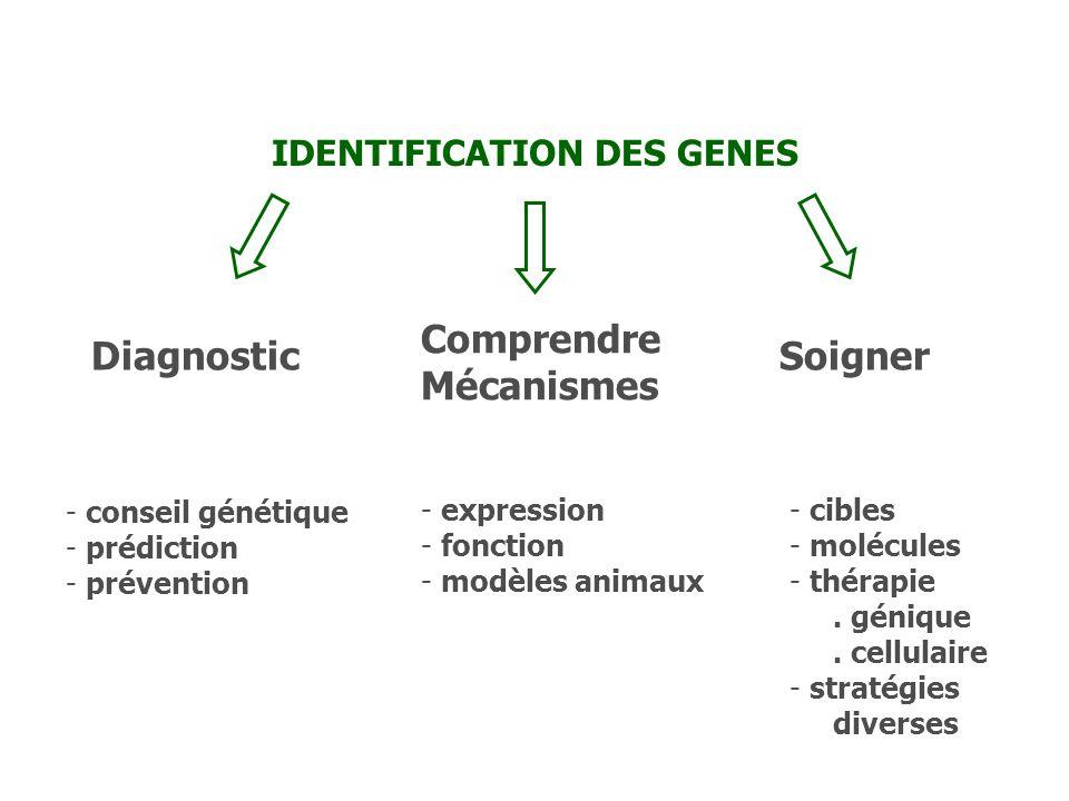 IDENTIFICATION DES GENES