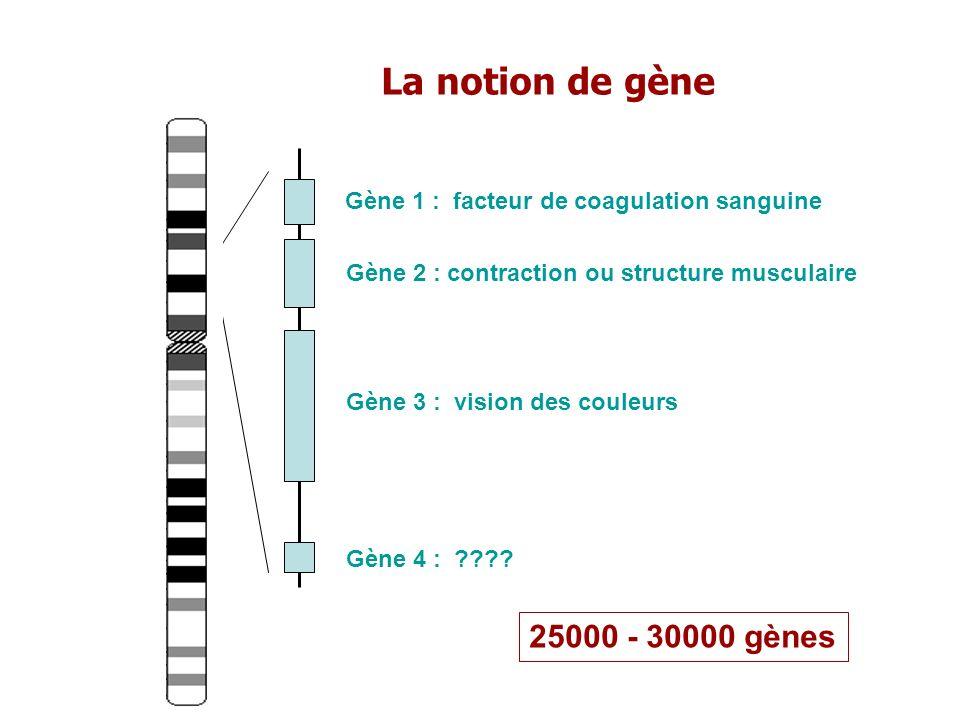 La notion de gène 25000 - 30000 gènes