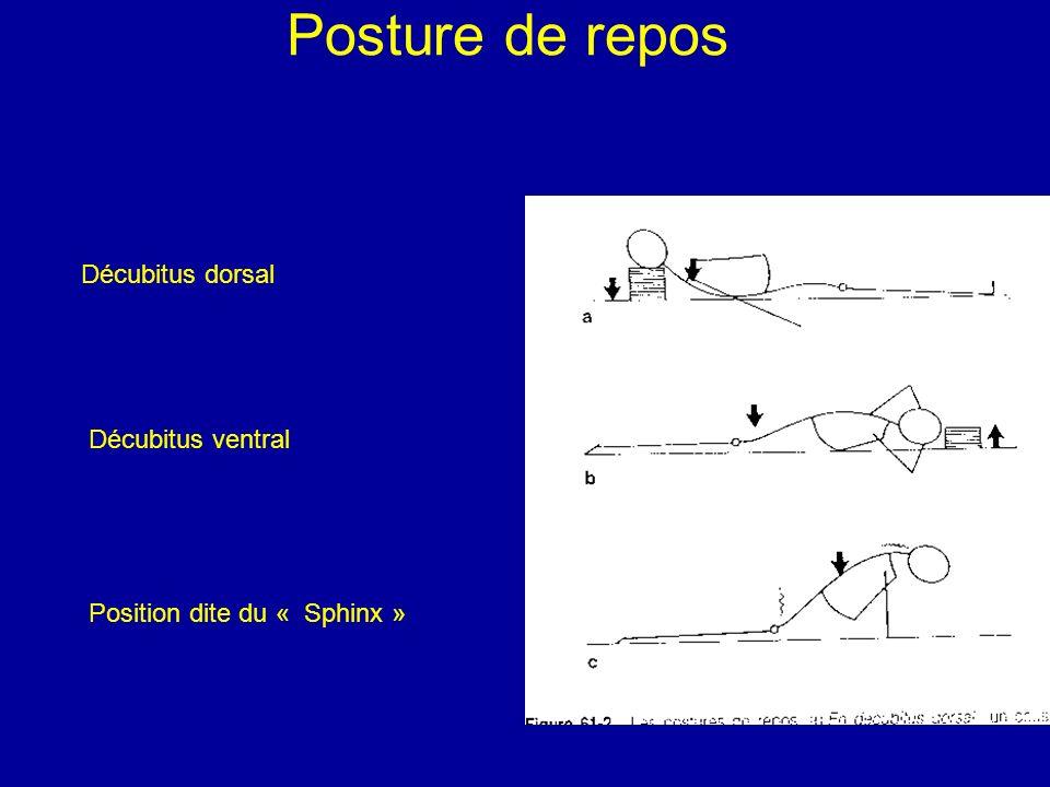 Posture de repos Décubitus dorsal Décubitus ventral
